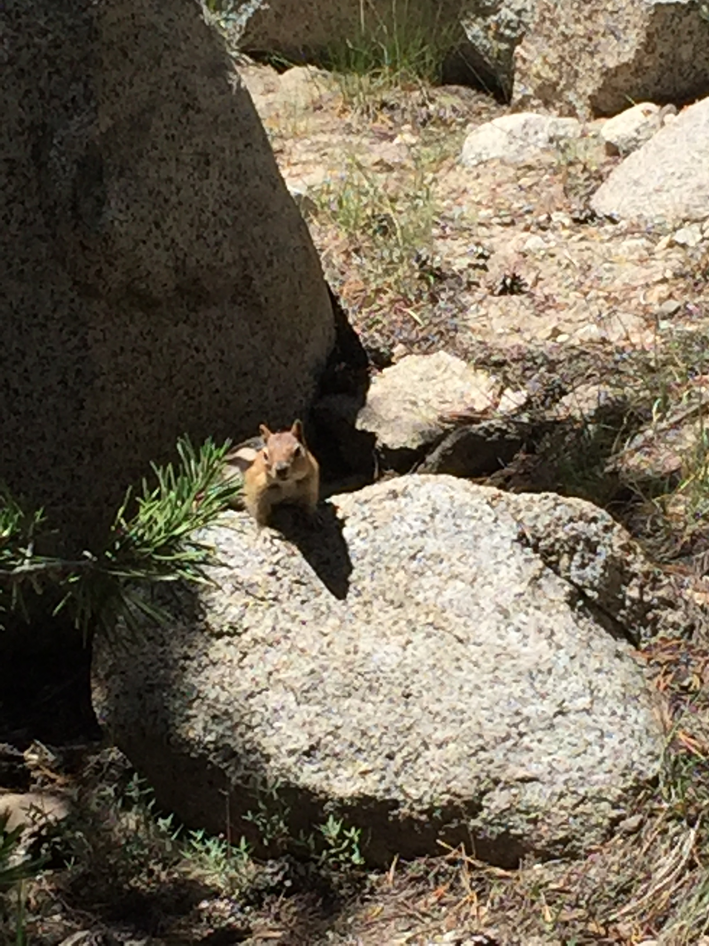 Chipmunk! We don't have these in the Bay Area so they're fun to see. But I imagine that for some people, the last thing in the world they want to see is a chipmunk! Kind of how I feel about seeing deer in Yosemite - all the other tourists gushing - and me just making a sour face!