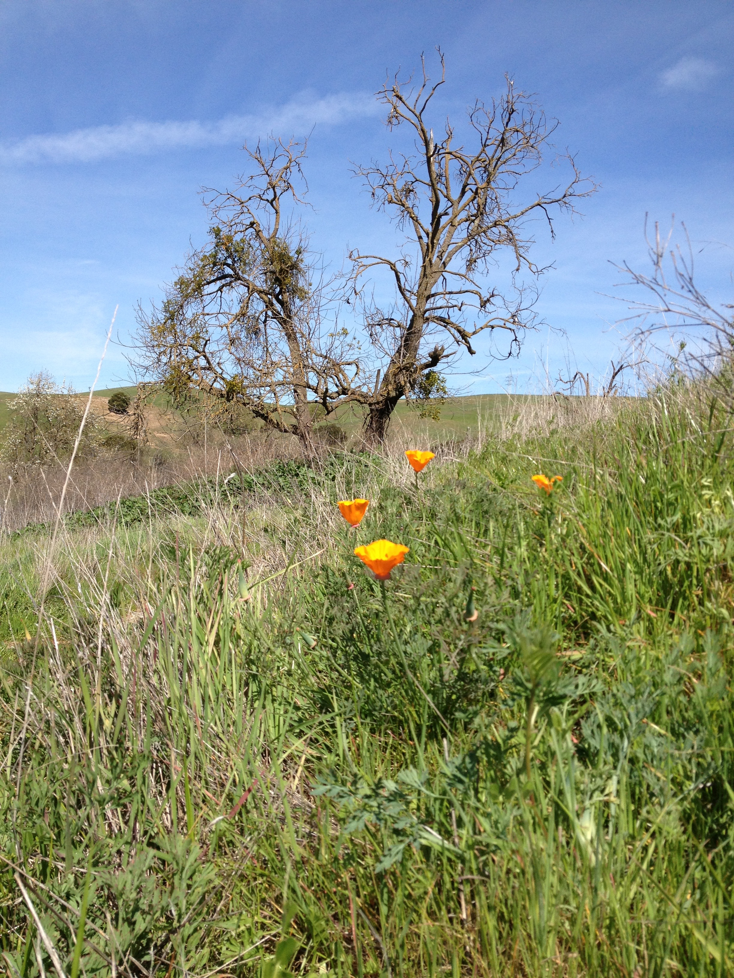Fernandez Ranch open space, 2013