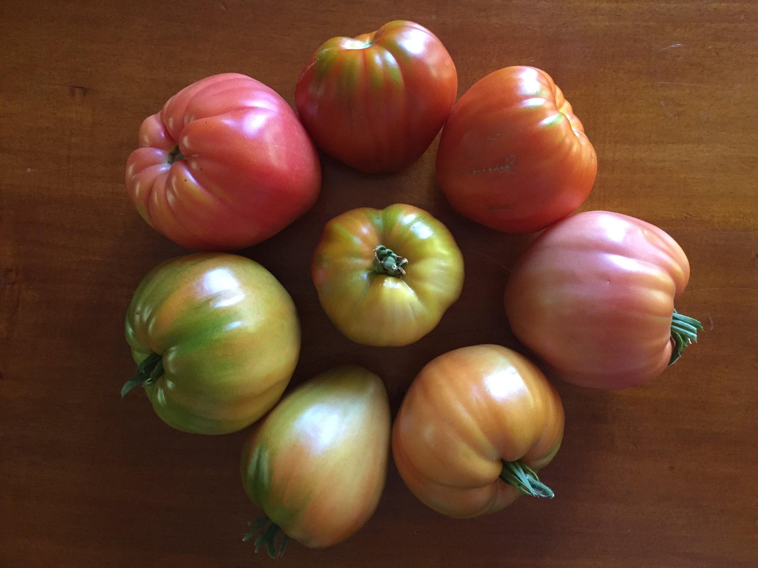 Italian Heirloom and Hungarian Heart tomatoes, in various stages of ripening