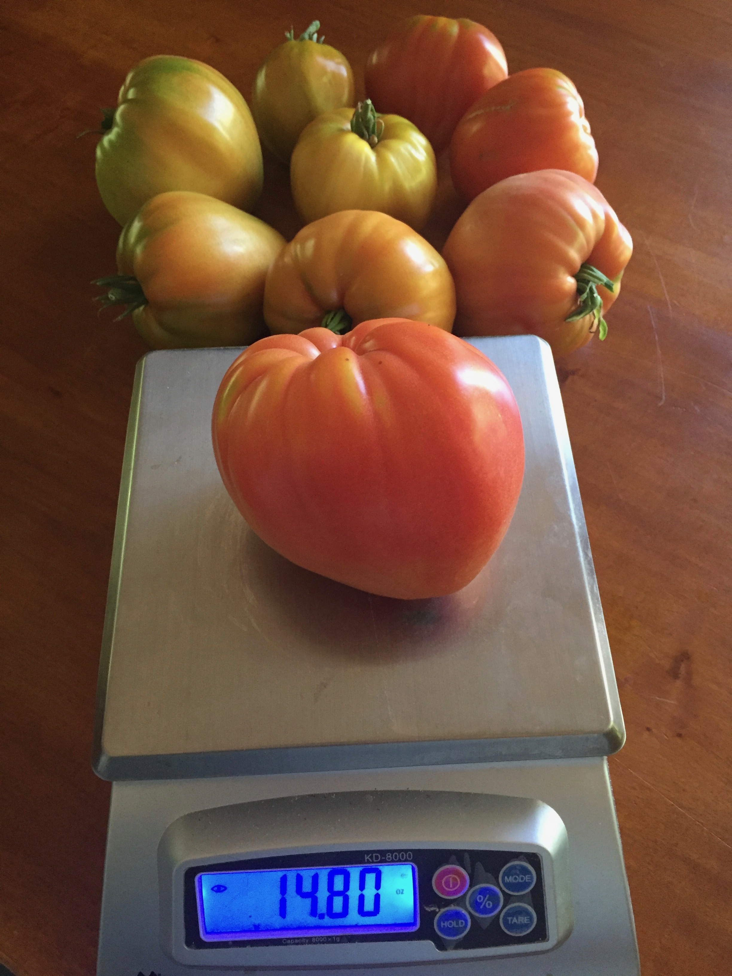 Almost a pound of delicious tomato goodness