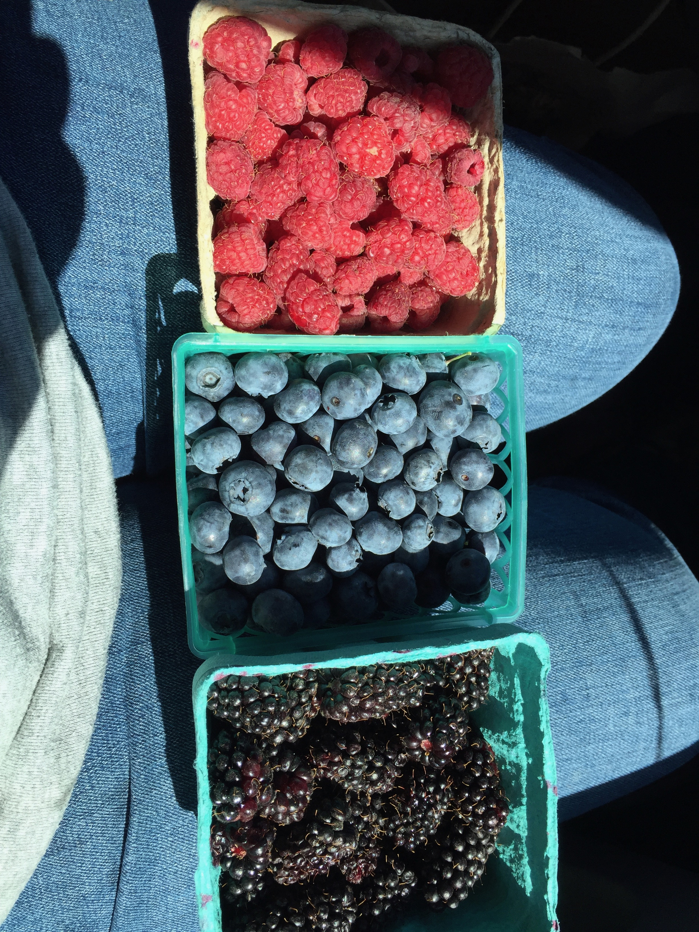 a lap full of berries