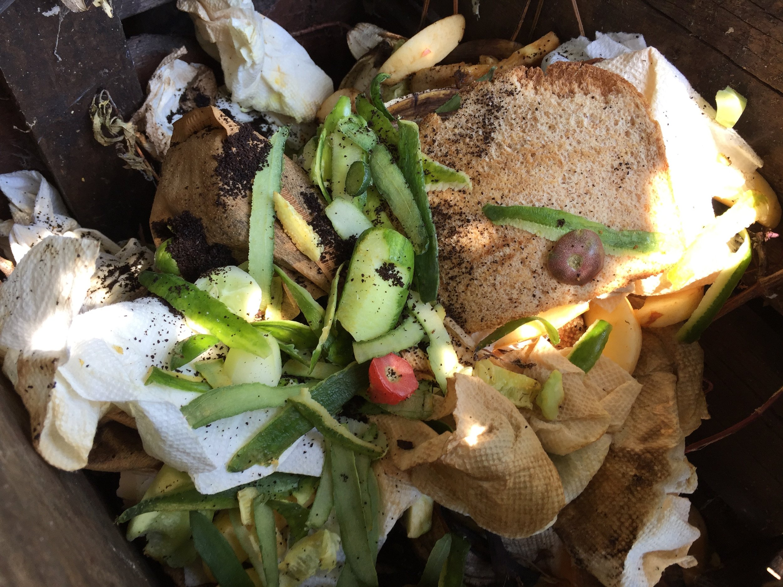 At the top of the worm compost bin: cucumber peelings, a heel of bread, coffee grounds and filters, paper towels, some apple bits that went bad, and tomato cores.
