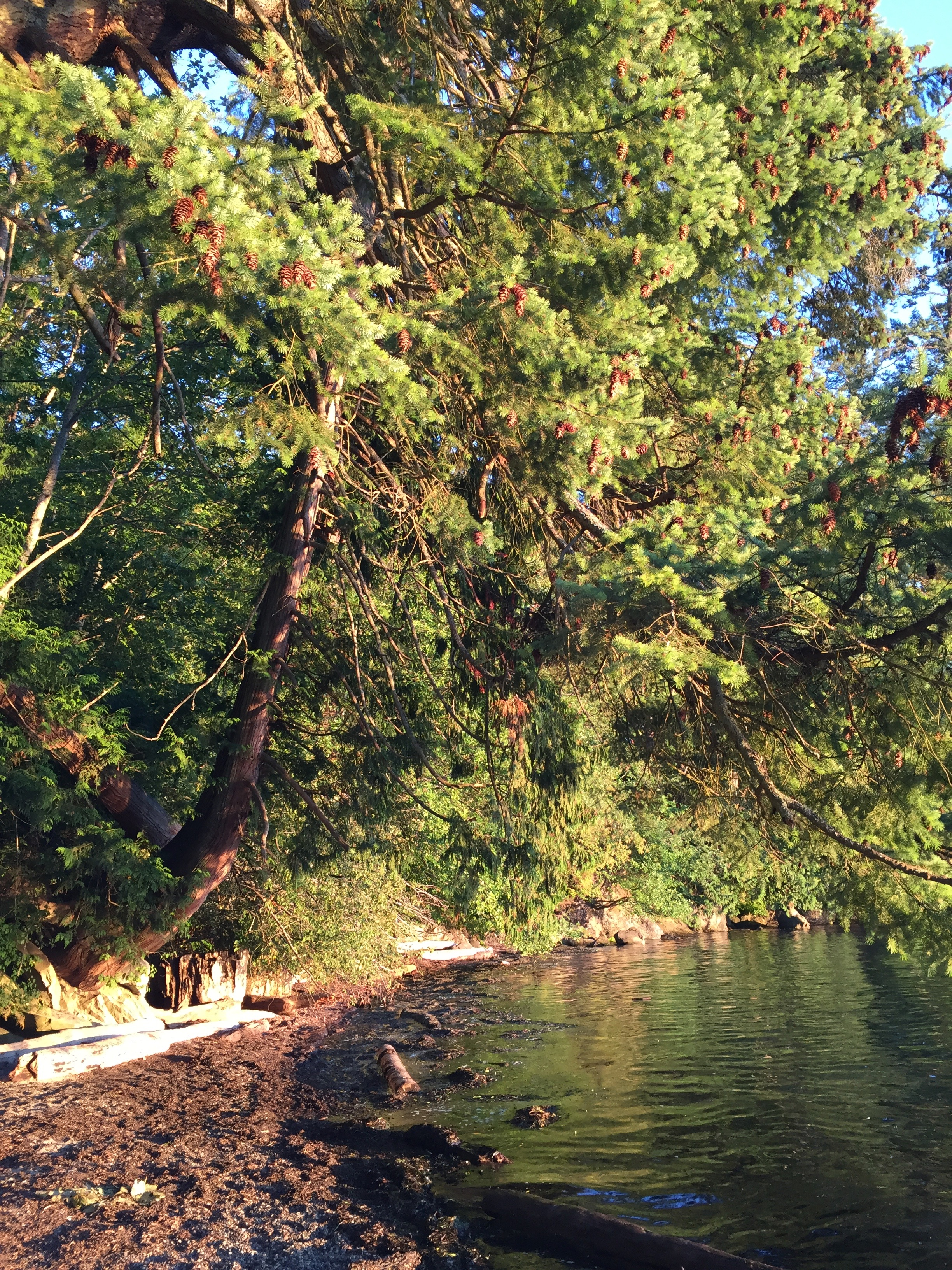 Wildcat Cove, Samish Bay, Larrabee State Park, Washington