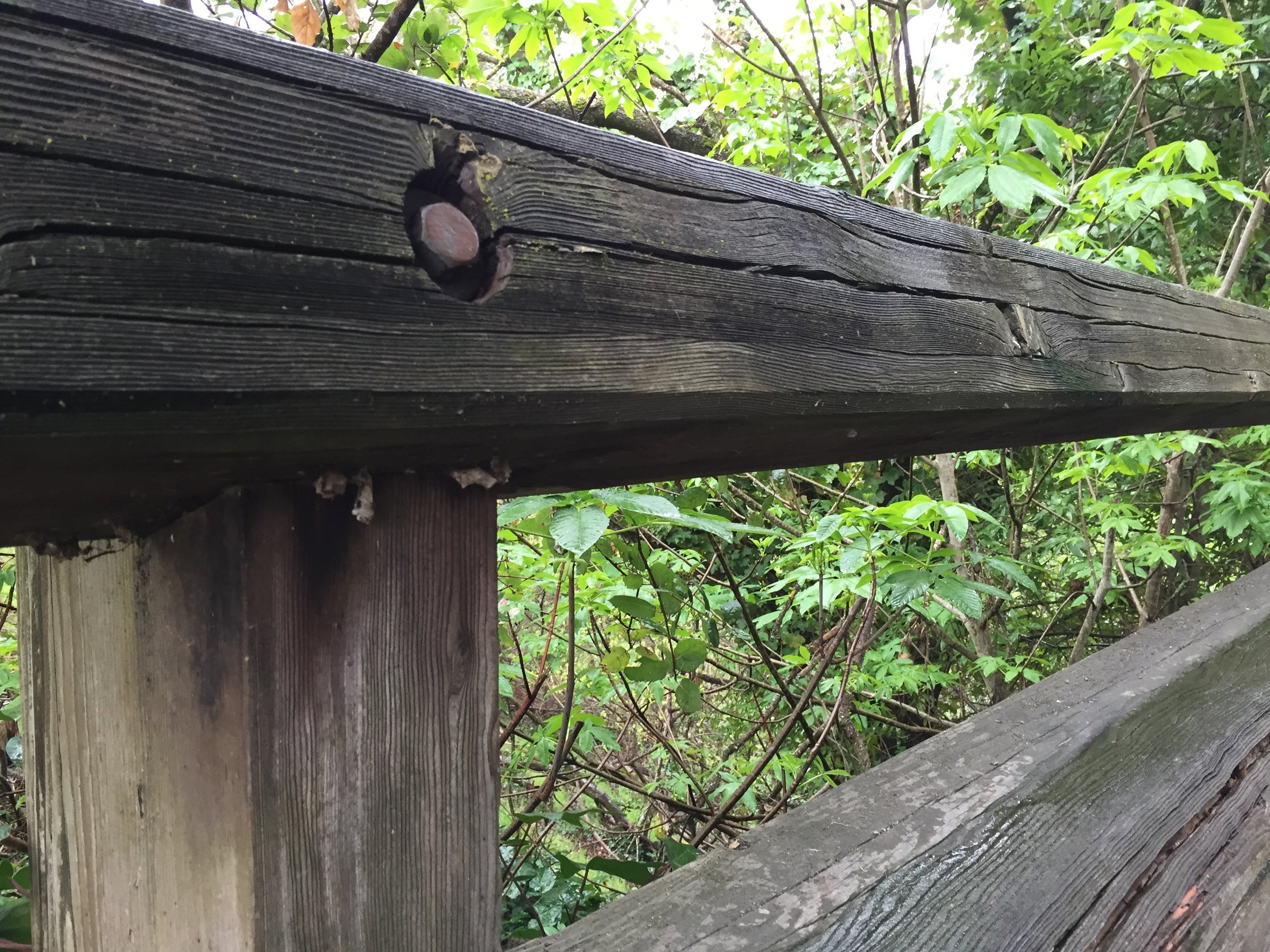 This is the bridge fence top rail; you can see some empty cocoons hanging down.