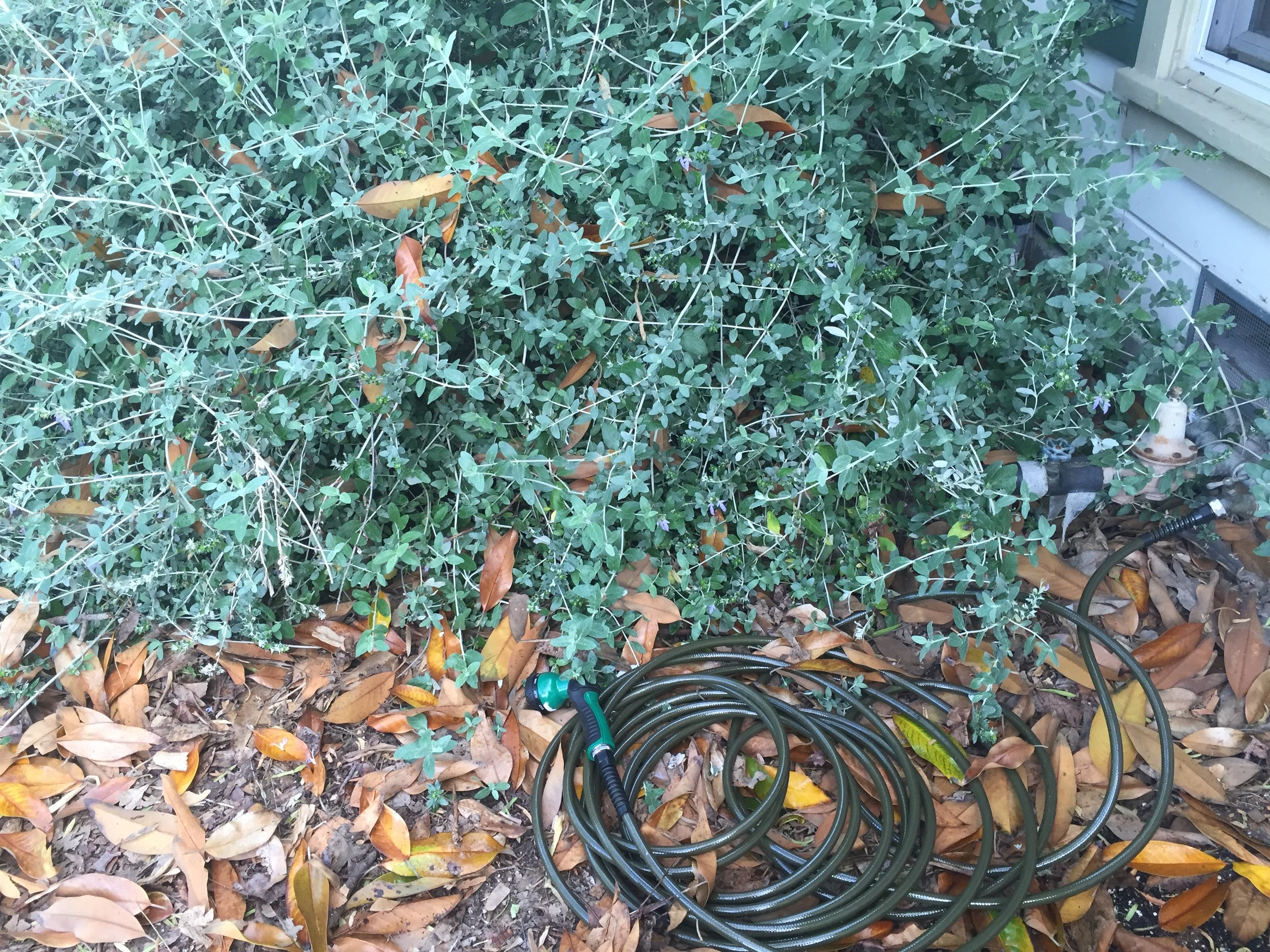Even messily curled up, this hose is still really unobtrusive and unnoticable