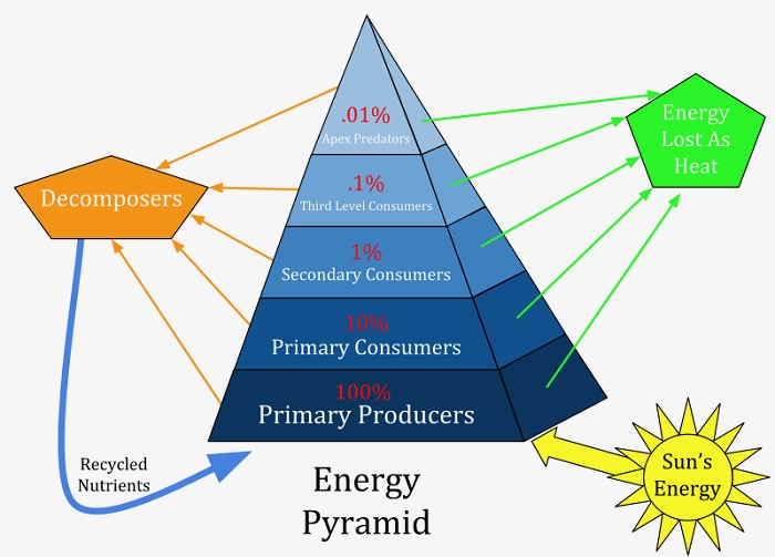 Ecological-Pyramid-1.jpg