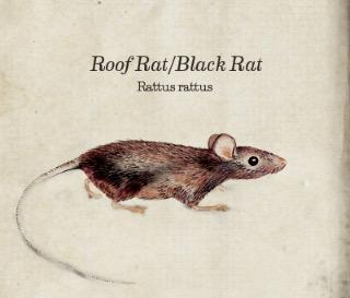 main_roof-rat-bug-book.jpg