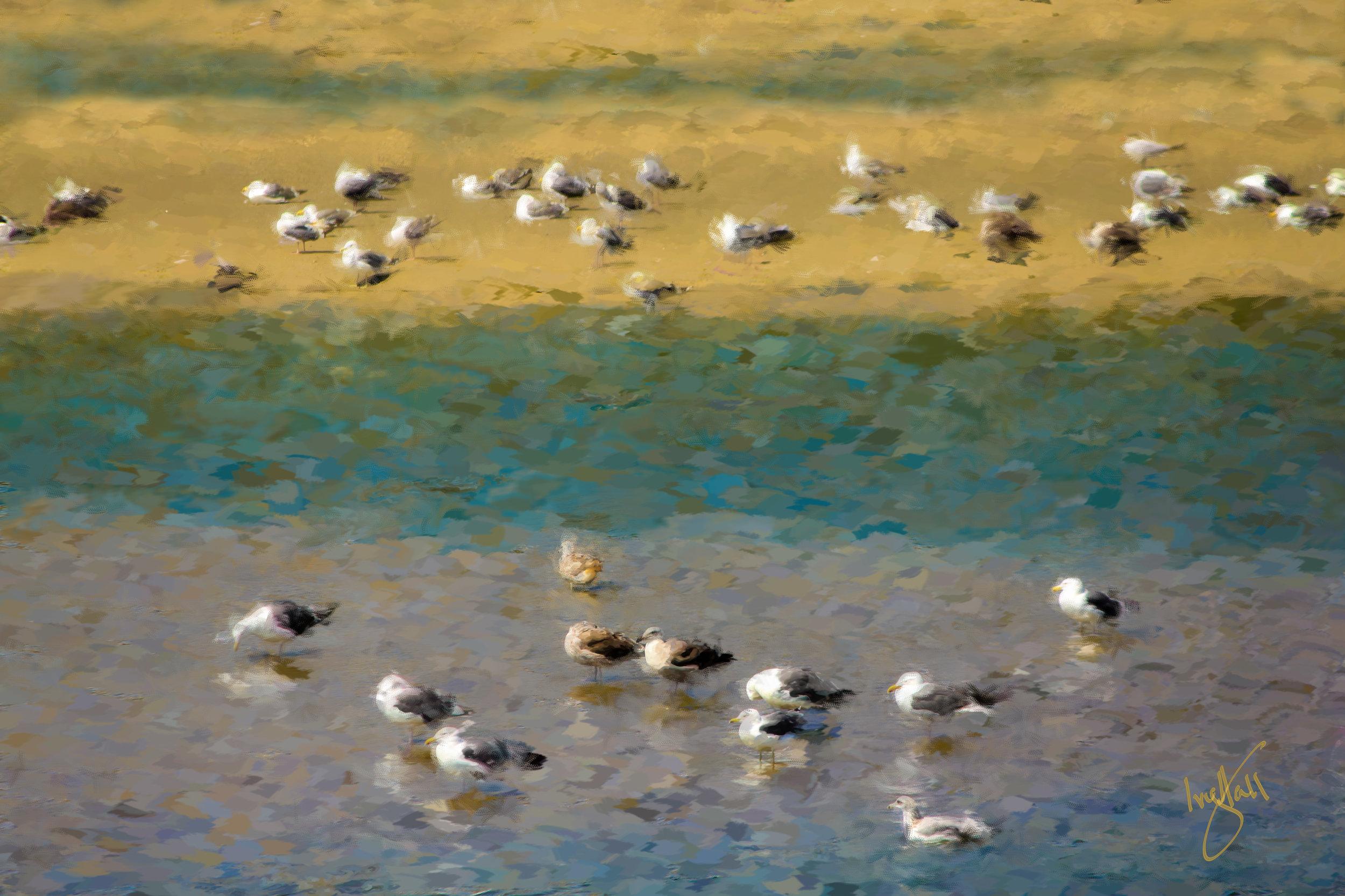 Birds_3718.jpg