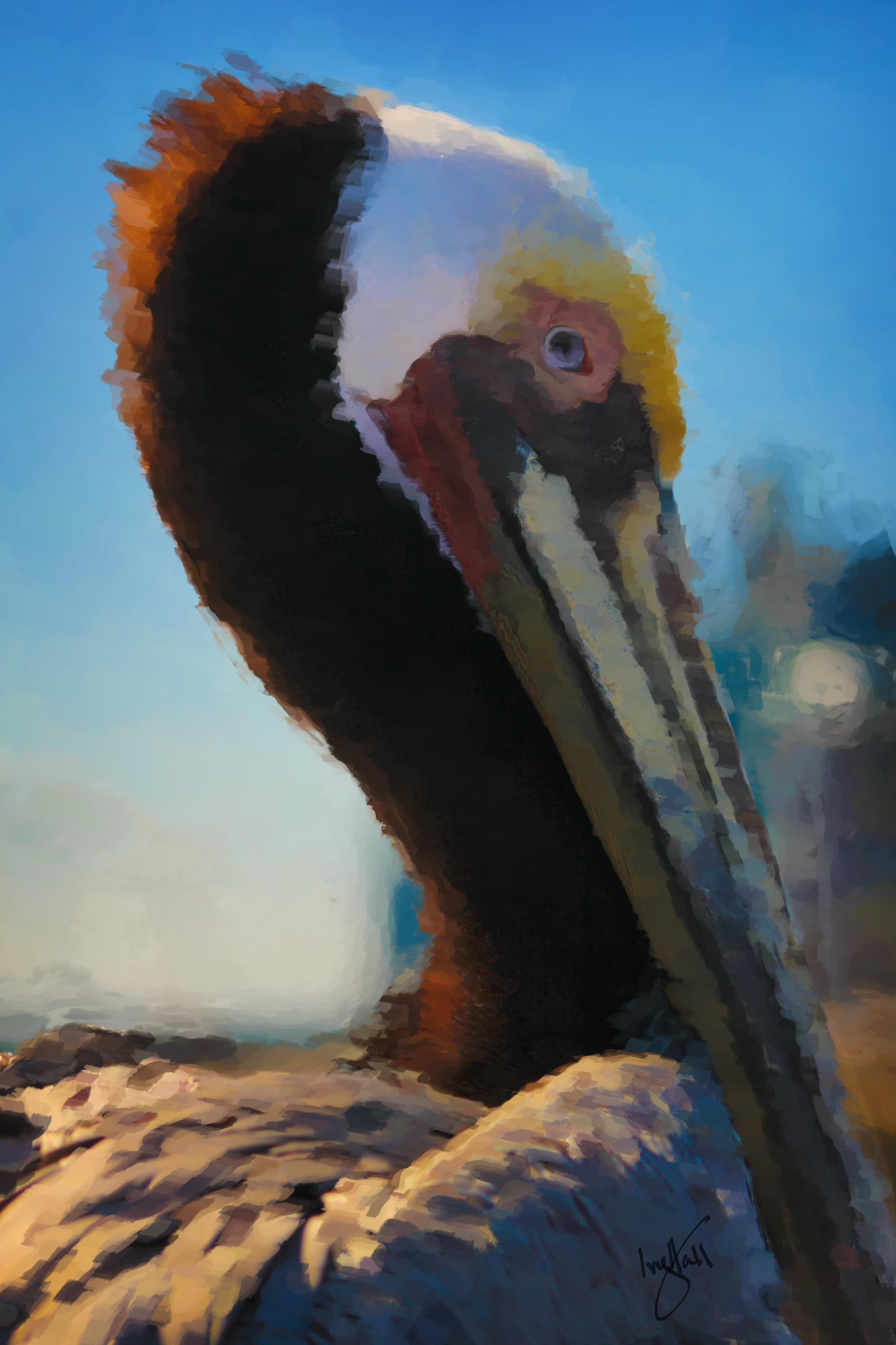 Pelican_0231_paint_web.jpg