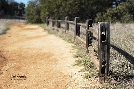 the-fence-w.jpg