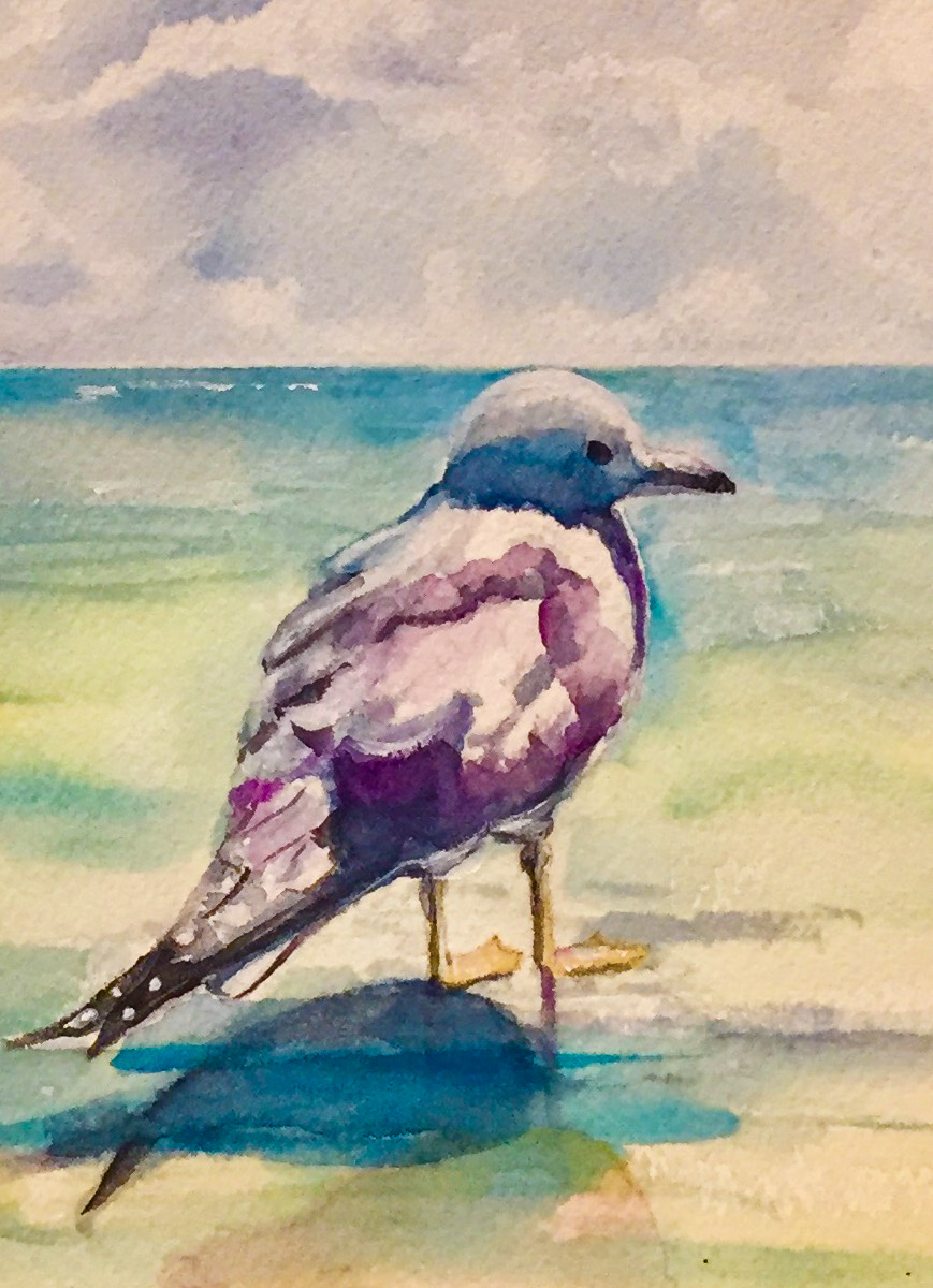 Watercolor-seagul.jpg