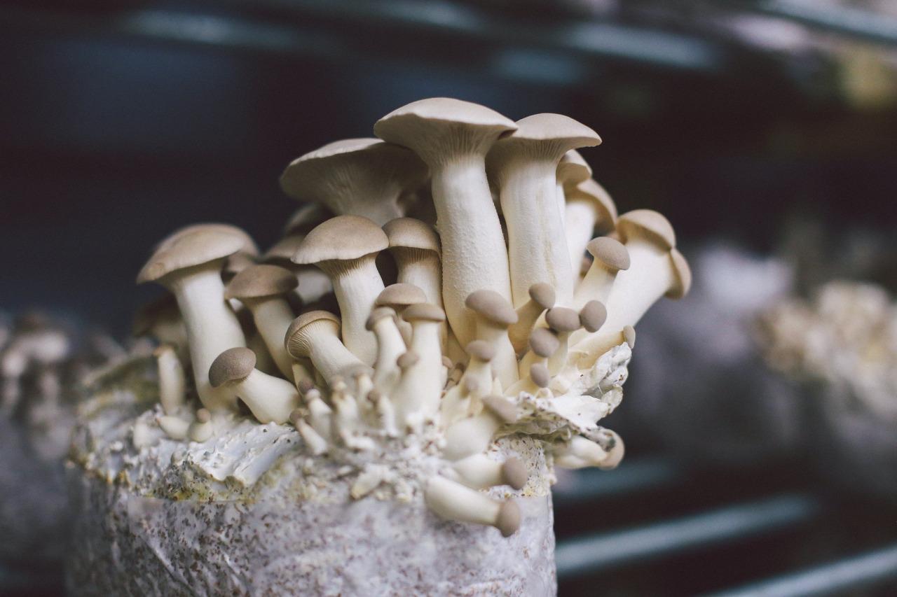 White Mountain Mushroom Company -