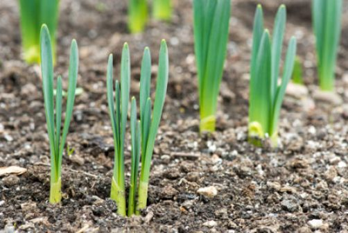 sprouted-spring-flowers-e1487693631261.jpg