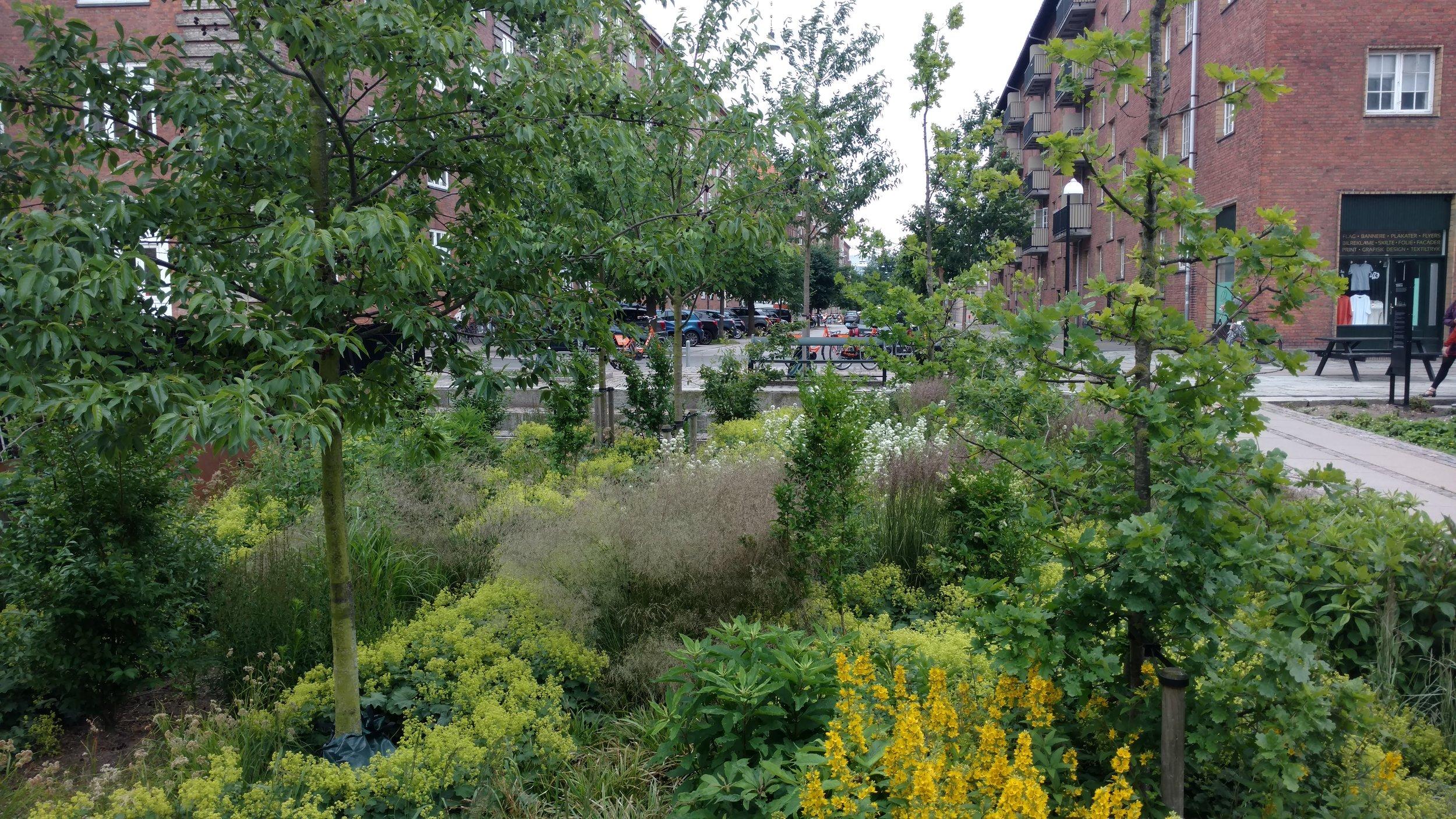 A parking lot became a stormwater garden