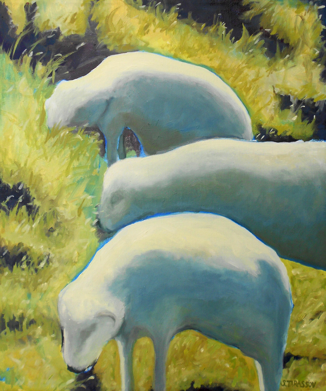 Balea Sheep