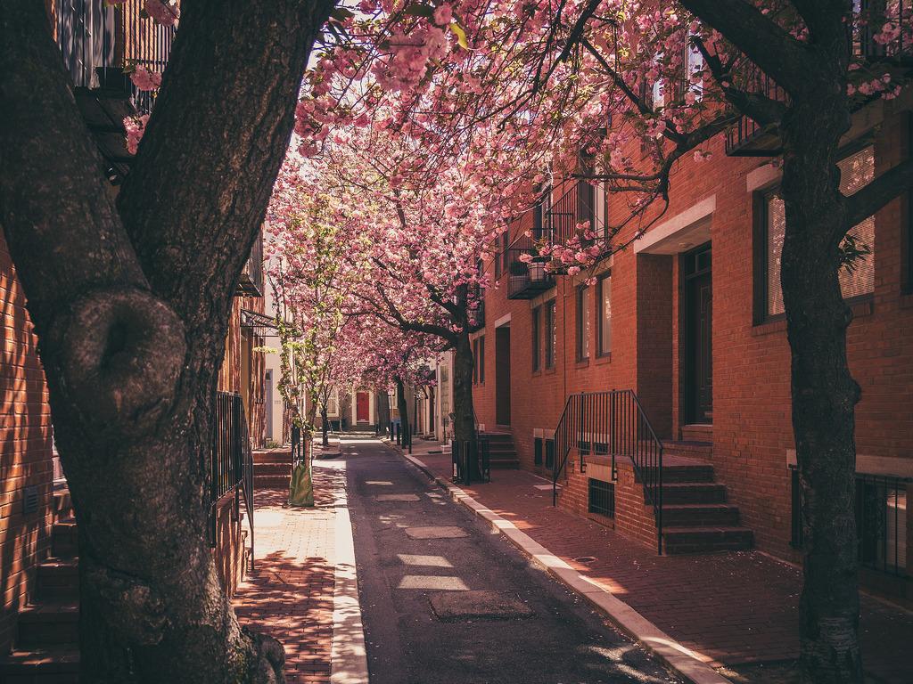 Waverly Street.jpg