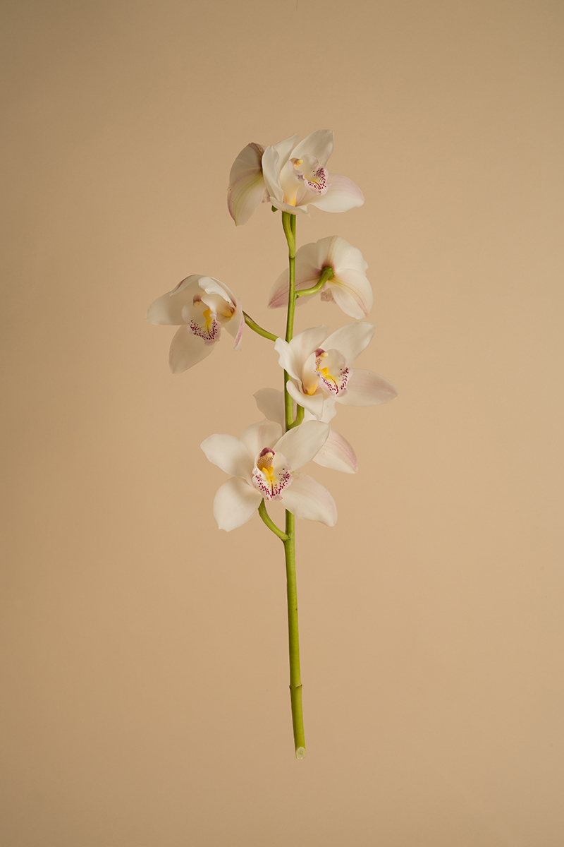 Orchid_web.jpg