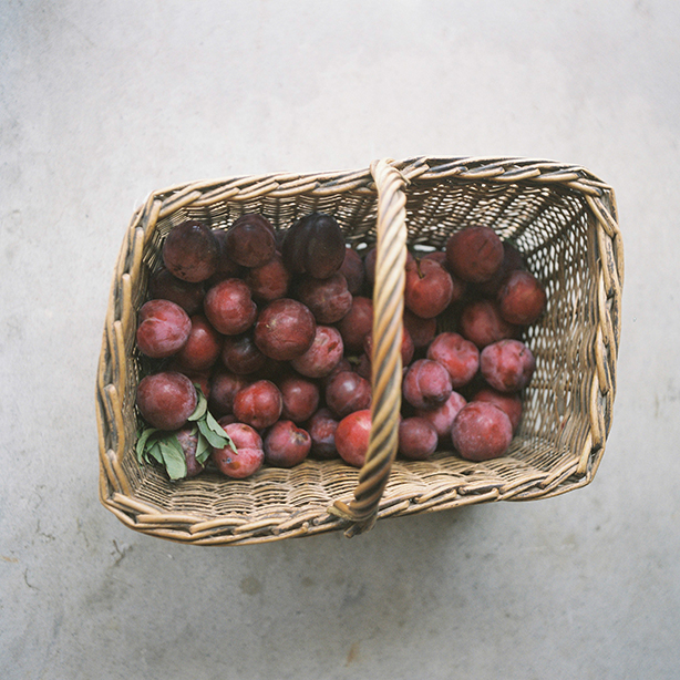 tauranga-farm-food-photographer.jpg