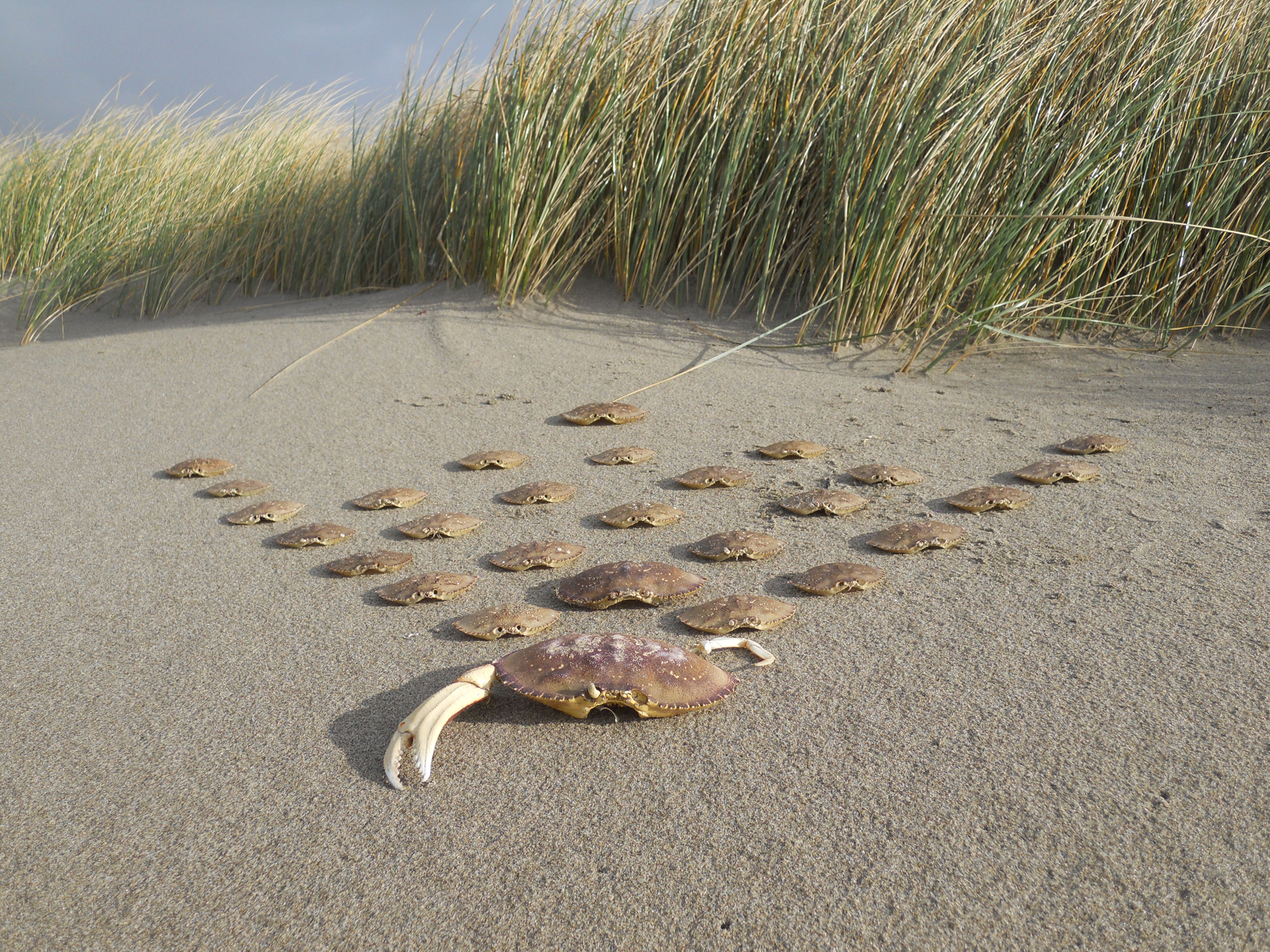 Marching Crabs