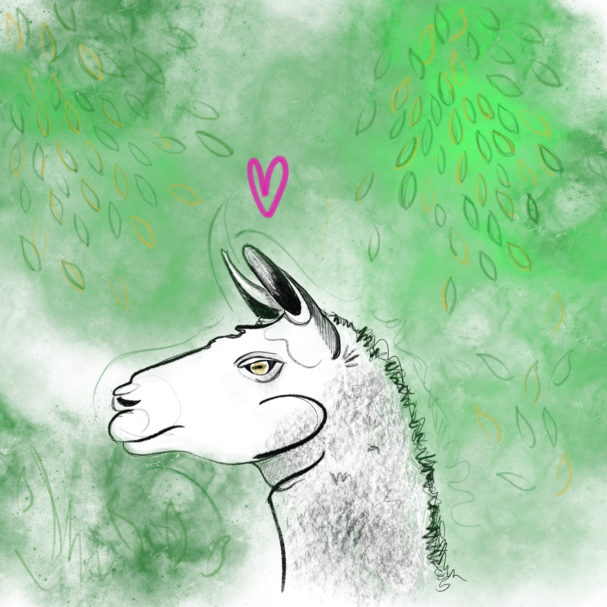 Llama_Portrait 2.jpg