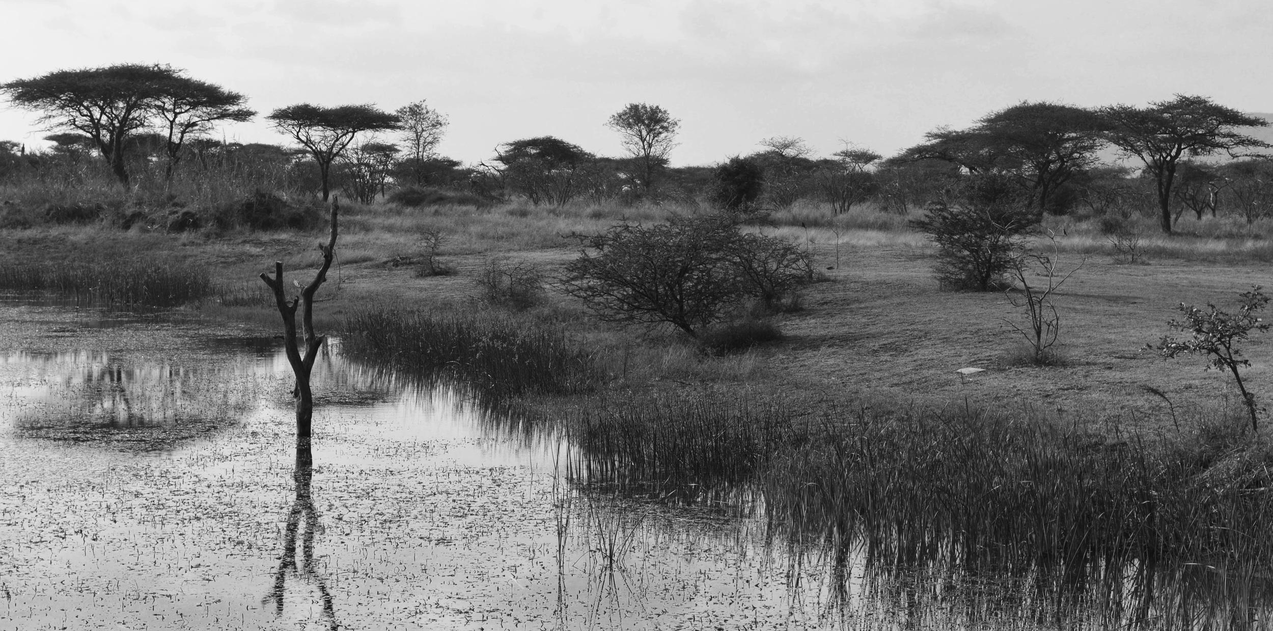 African Swamp.jpg