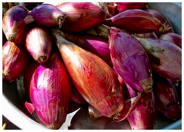 Italian Red Torpedo Onions