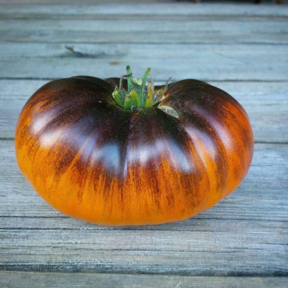 Lucid Gem Artisan Tomato