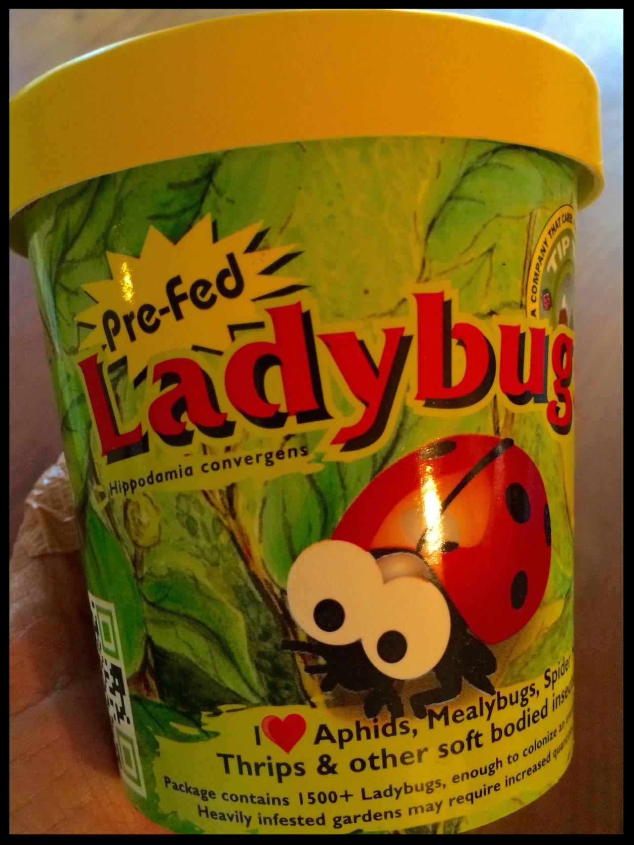 LadybugCup1.2.jpeg
