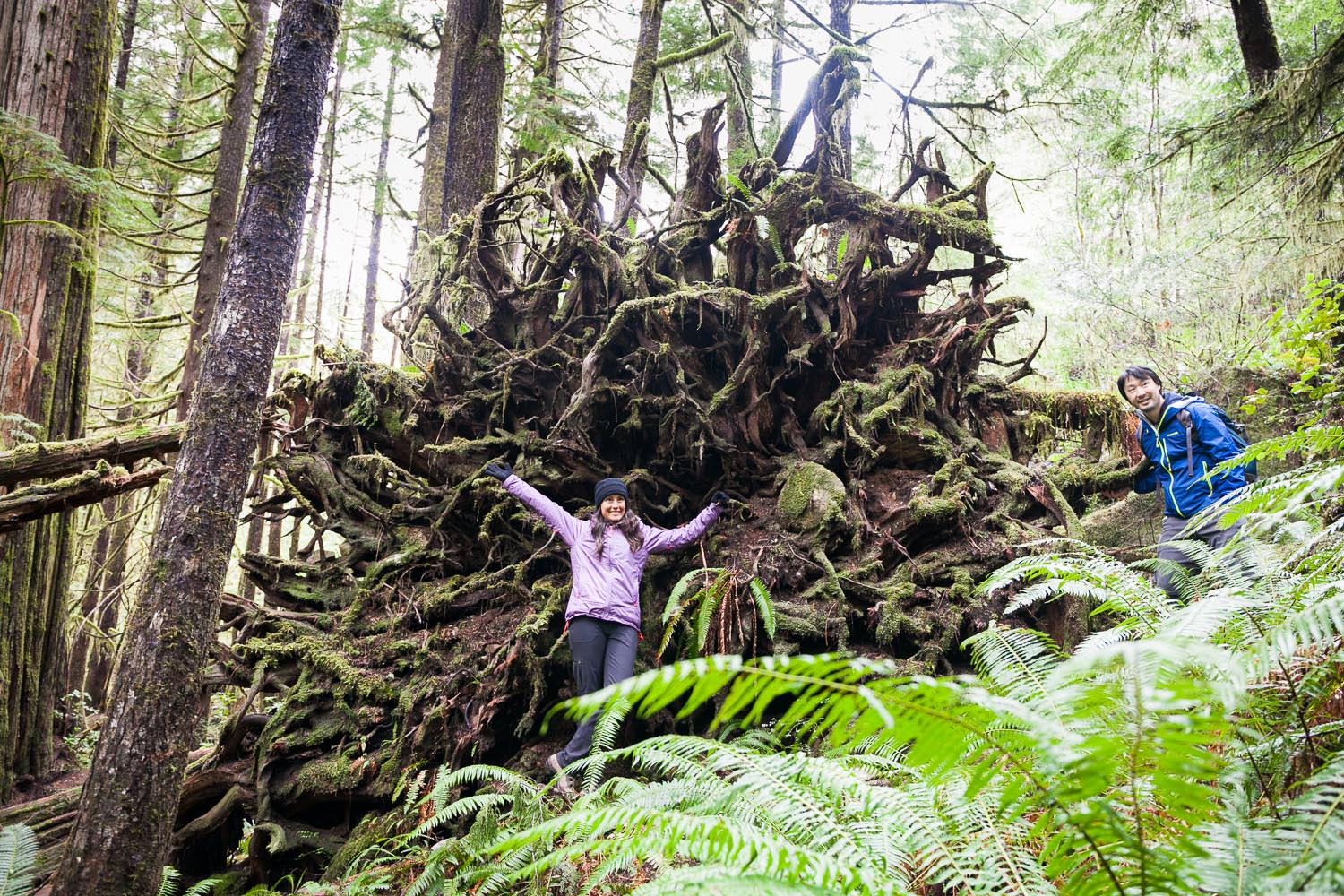 avatar-grove-tree-roots-hiker.jpg