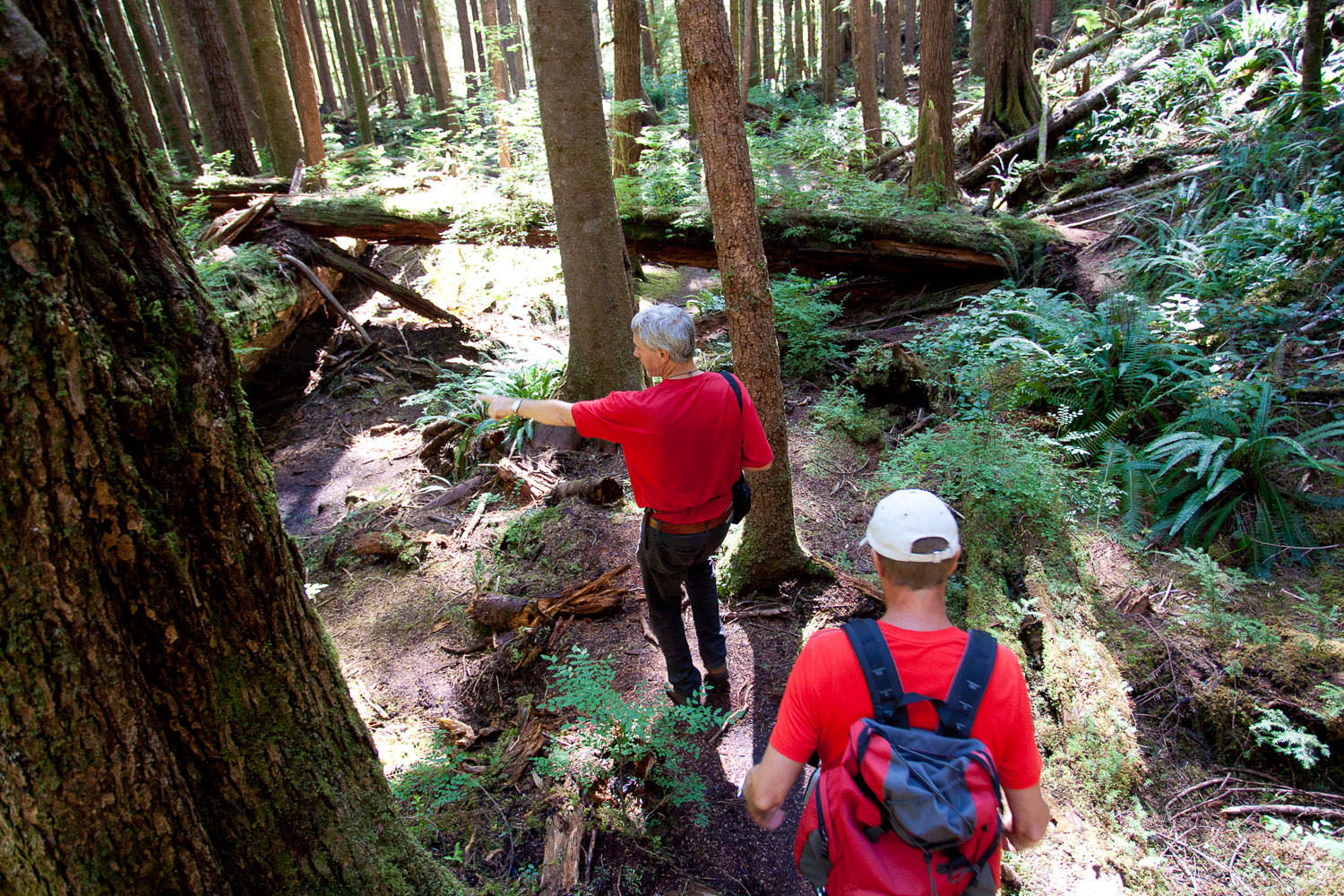 hikers-on-trail-avatar-grove.jpg