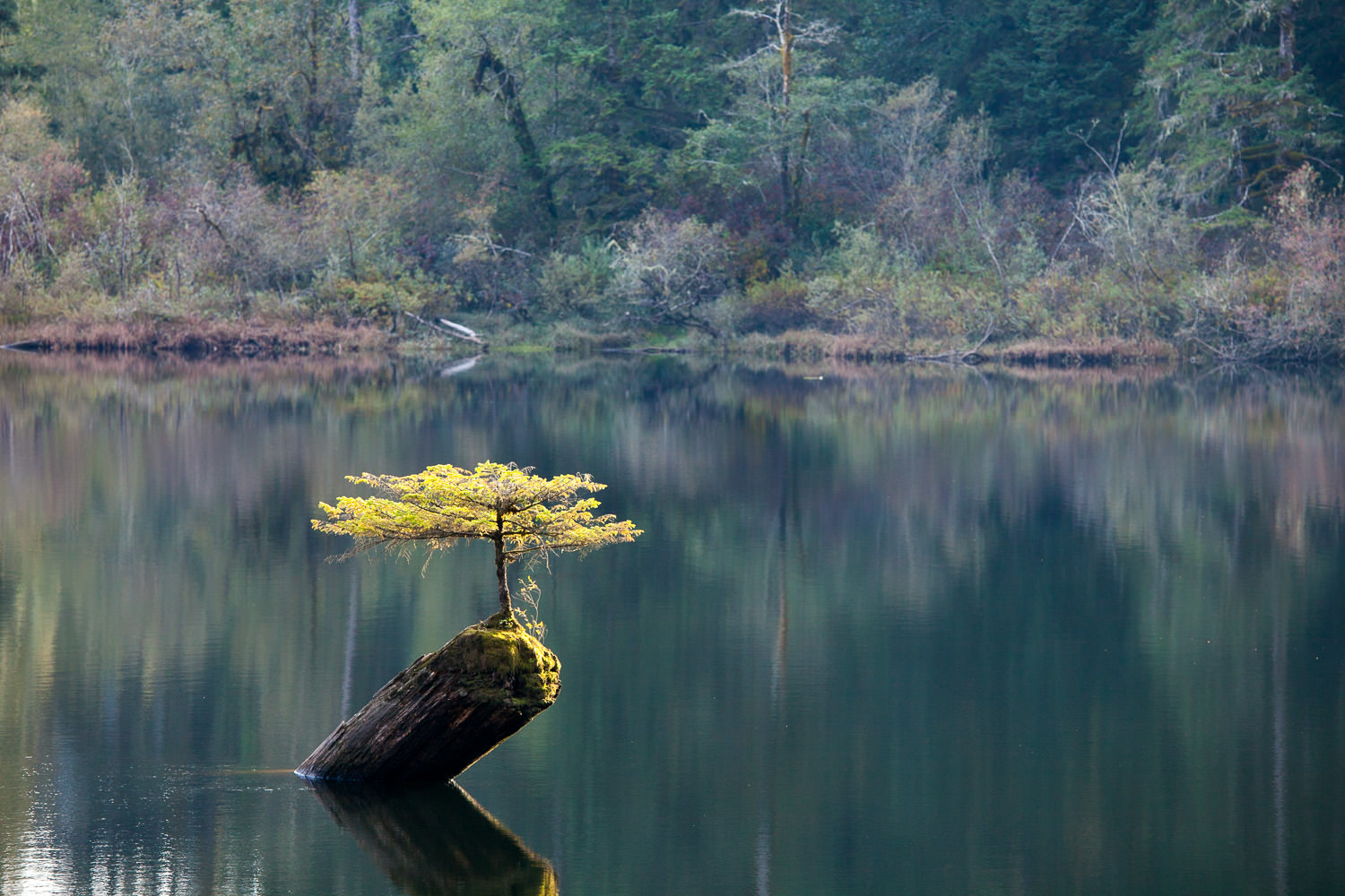 fairy-lake-bonsai-tree-on-log.jpg