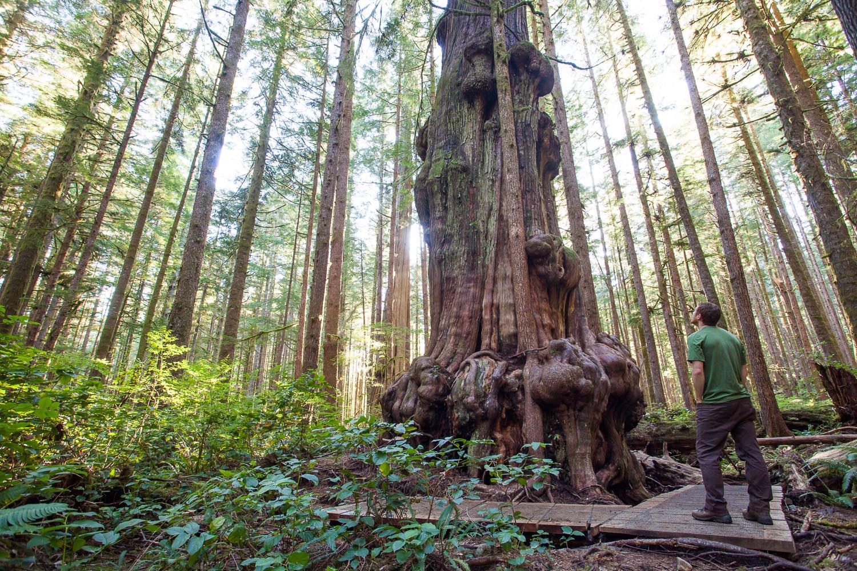 big-tree-tour-avatar-grove-tj-watt.jpg