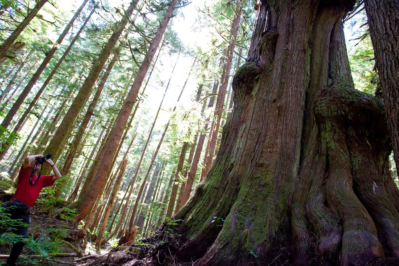 photographing-avatar-grove-port-renfrew.jpg
