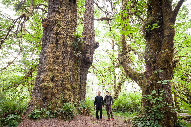 big-tree-tours-port-renfrew-bc.jpg