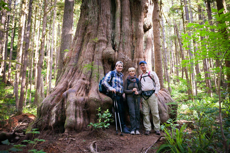 avatar-grove-hiking-tour-vancouver-island.jpg