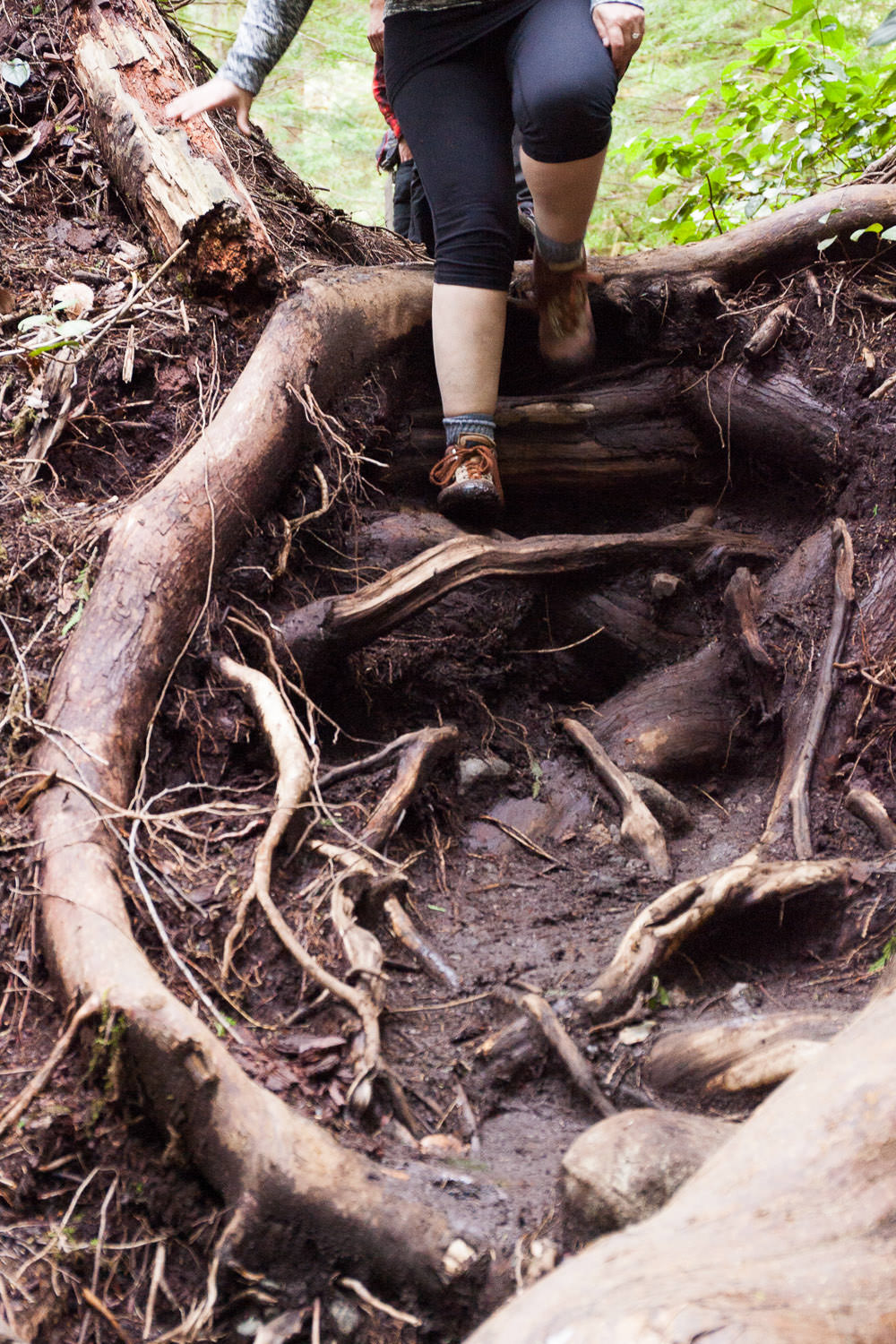 Trail-Example-Avatar-roots.jpg