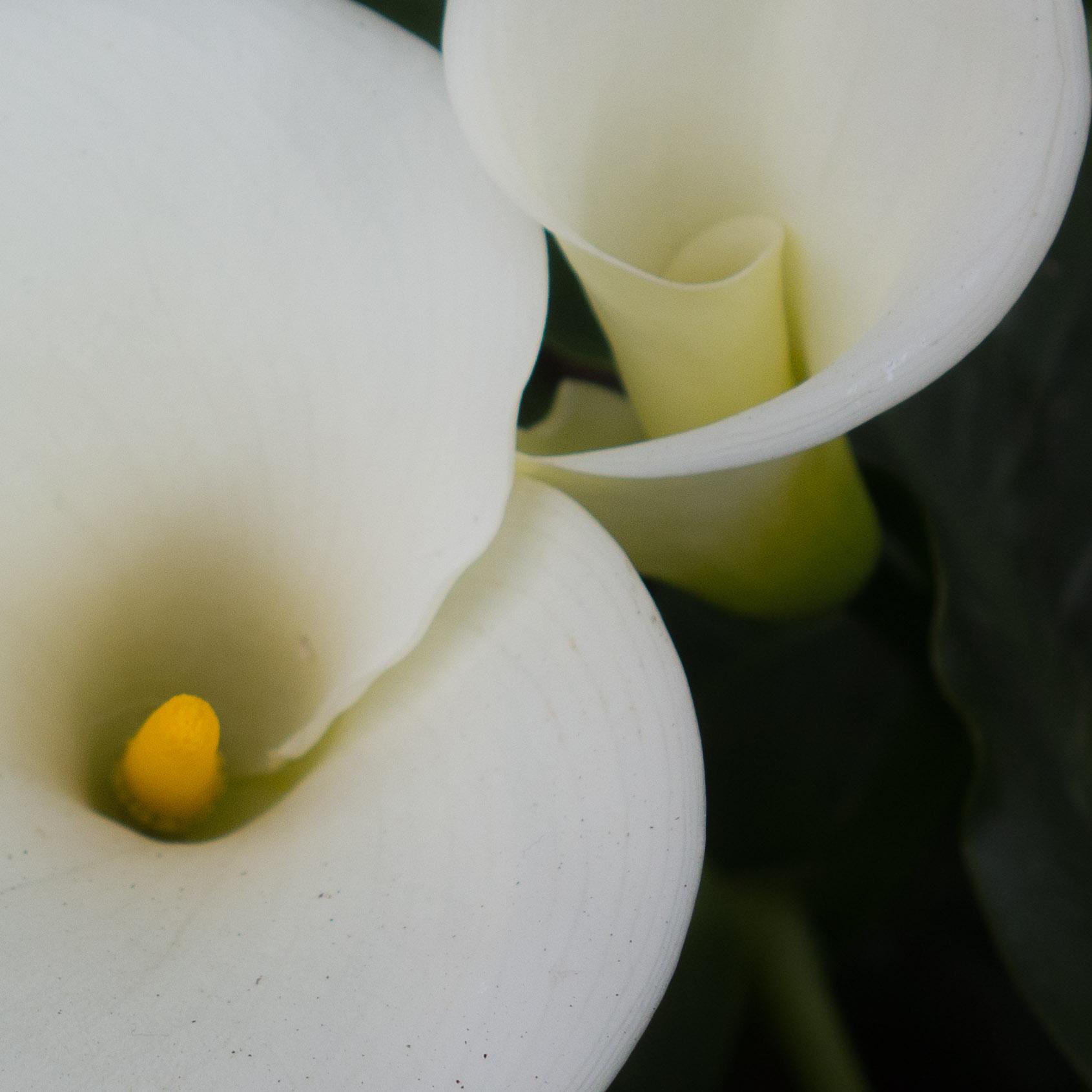 151207 Lily Embrace 1x1-02224.jpg