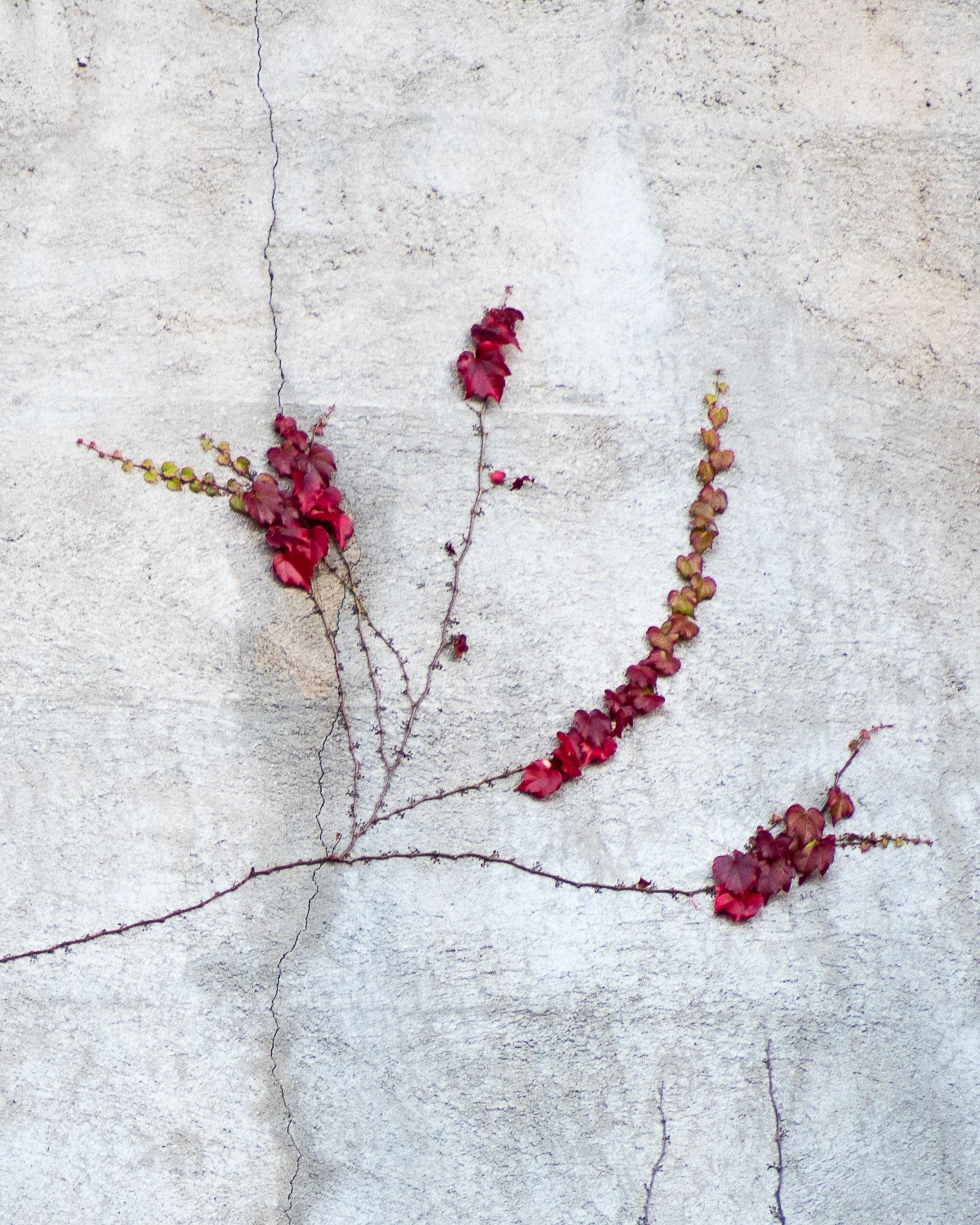 151214 Wall Vine 2 8x10-0289.jpg