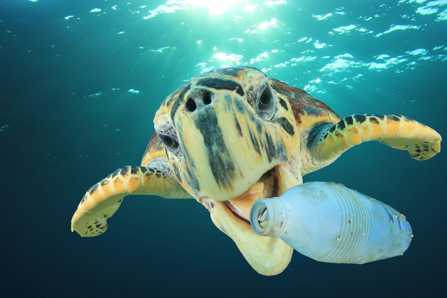 Plastic-pollution-in-Earth's-oceans-could-triple-by-2025-.jpg