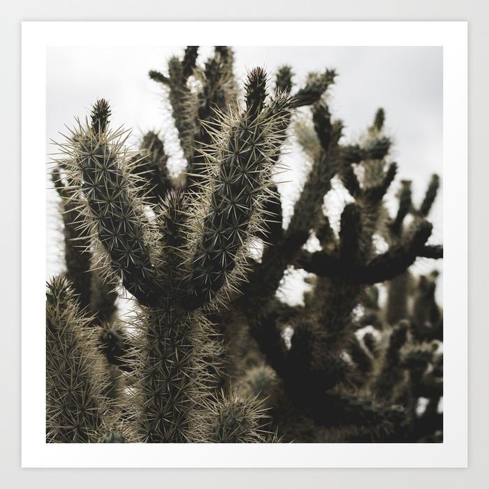 - Cactus_0007 Art Print