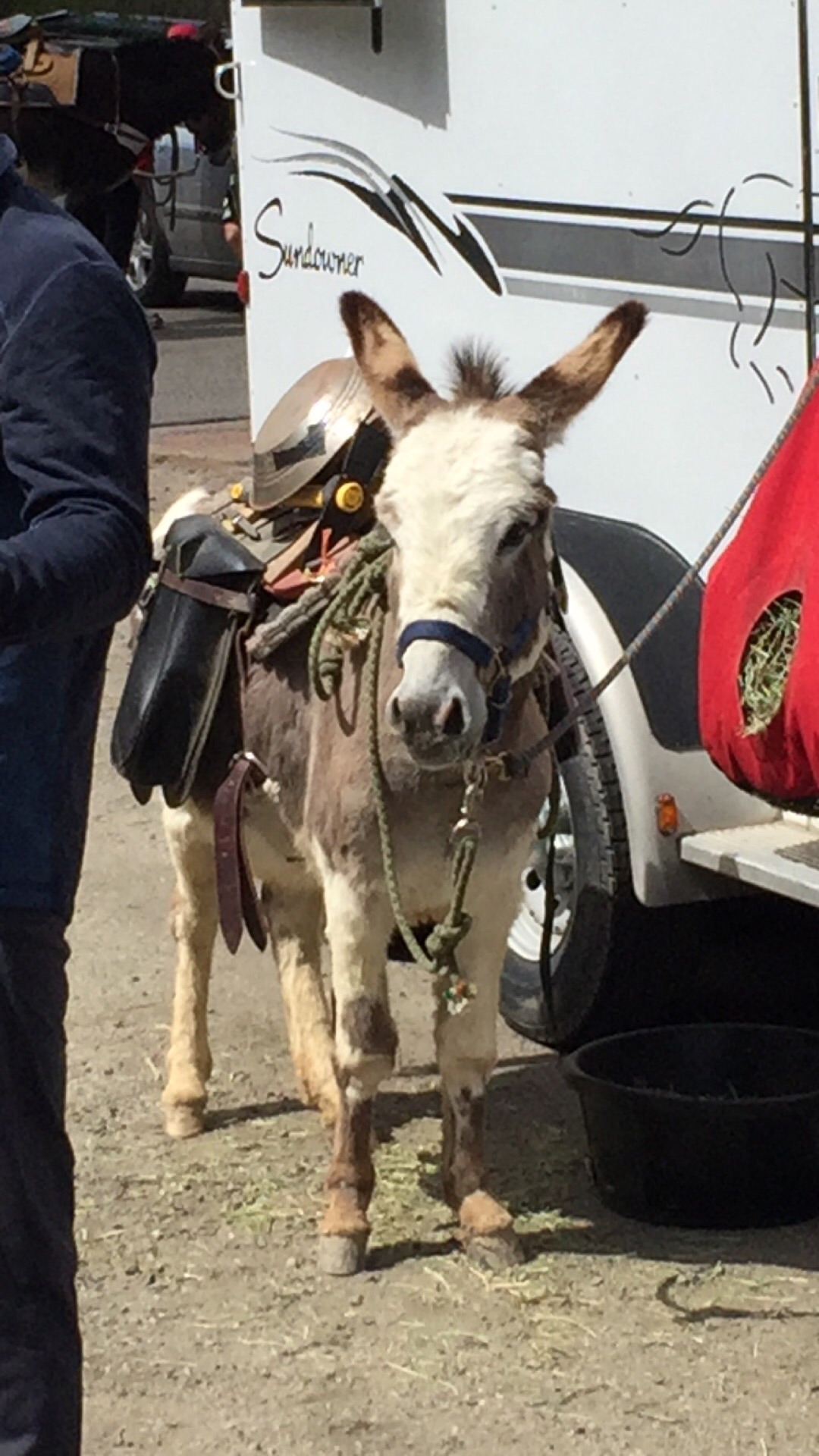 Burro is the Spanish word for donkey