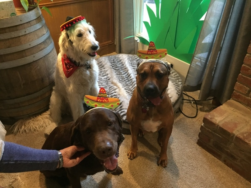 The dogs even got in on the fun!