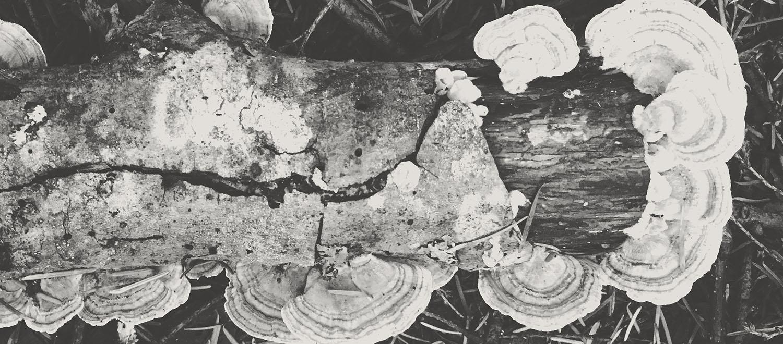 mushroom grey_web.jpg