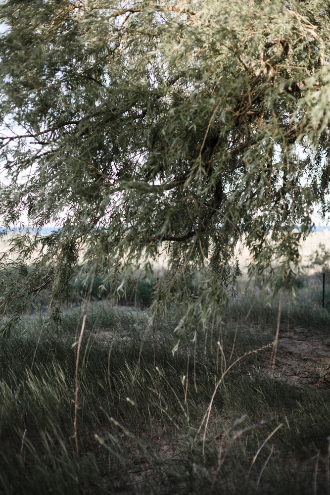 Loyola beach photograph of weeping willow by Chicago photographer