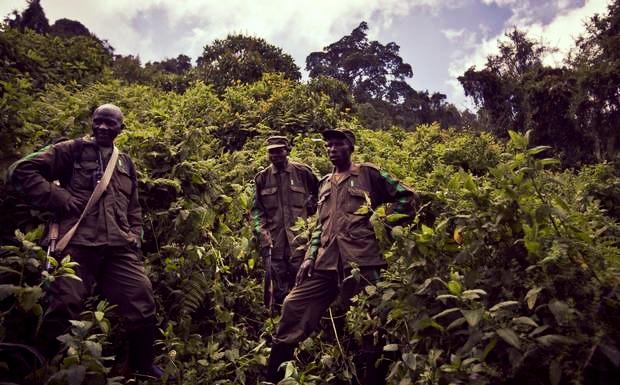 ABC507-Rwanda+Gorilla+TrekA.jpg