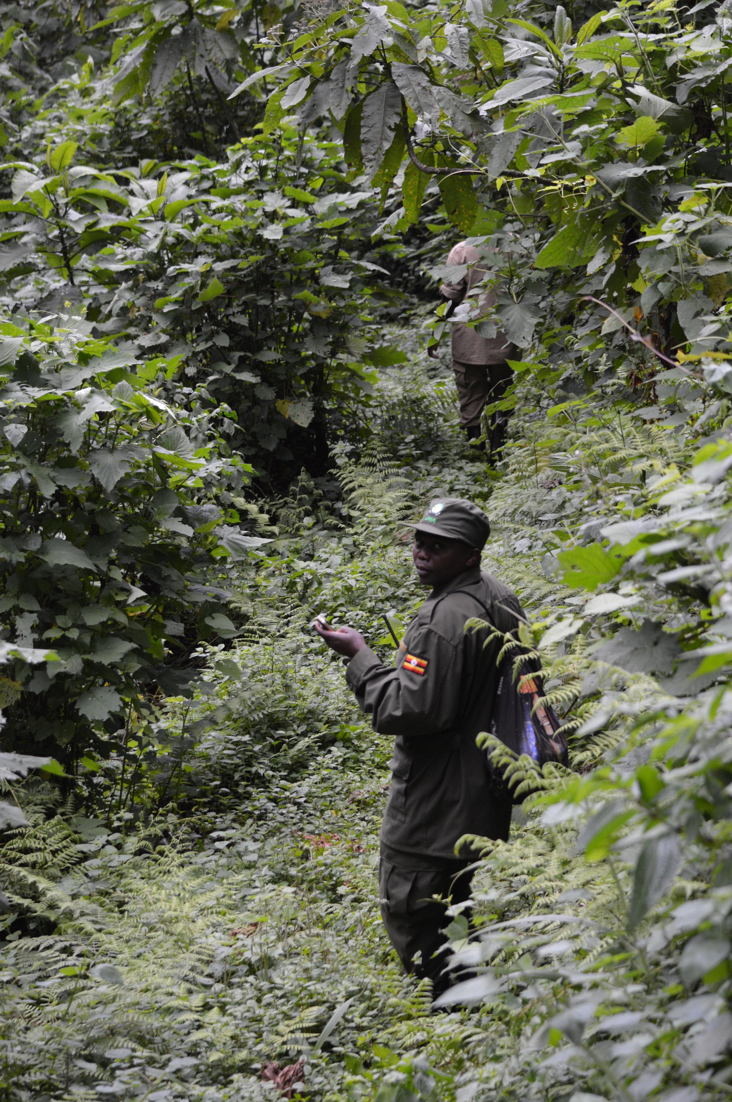 Advance team of rangers leaving for gorilla trekking in Uganda
