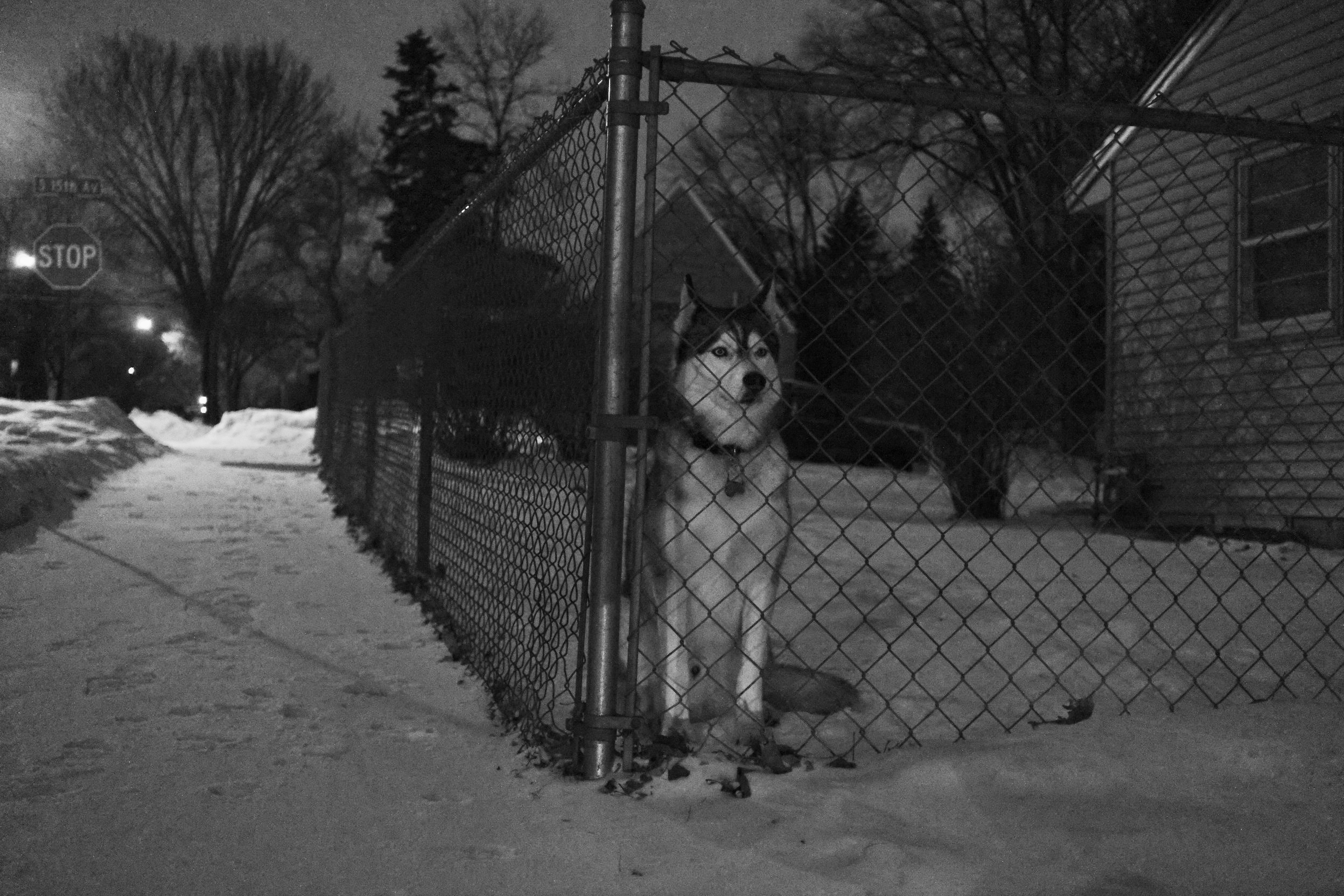 winter wolf.jpg