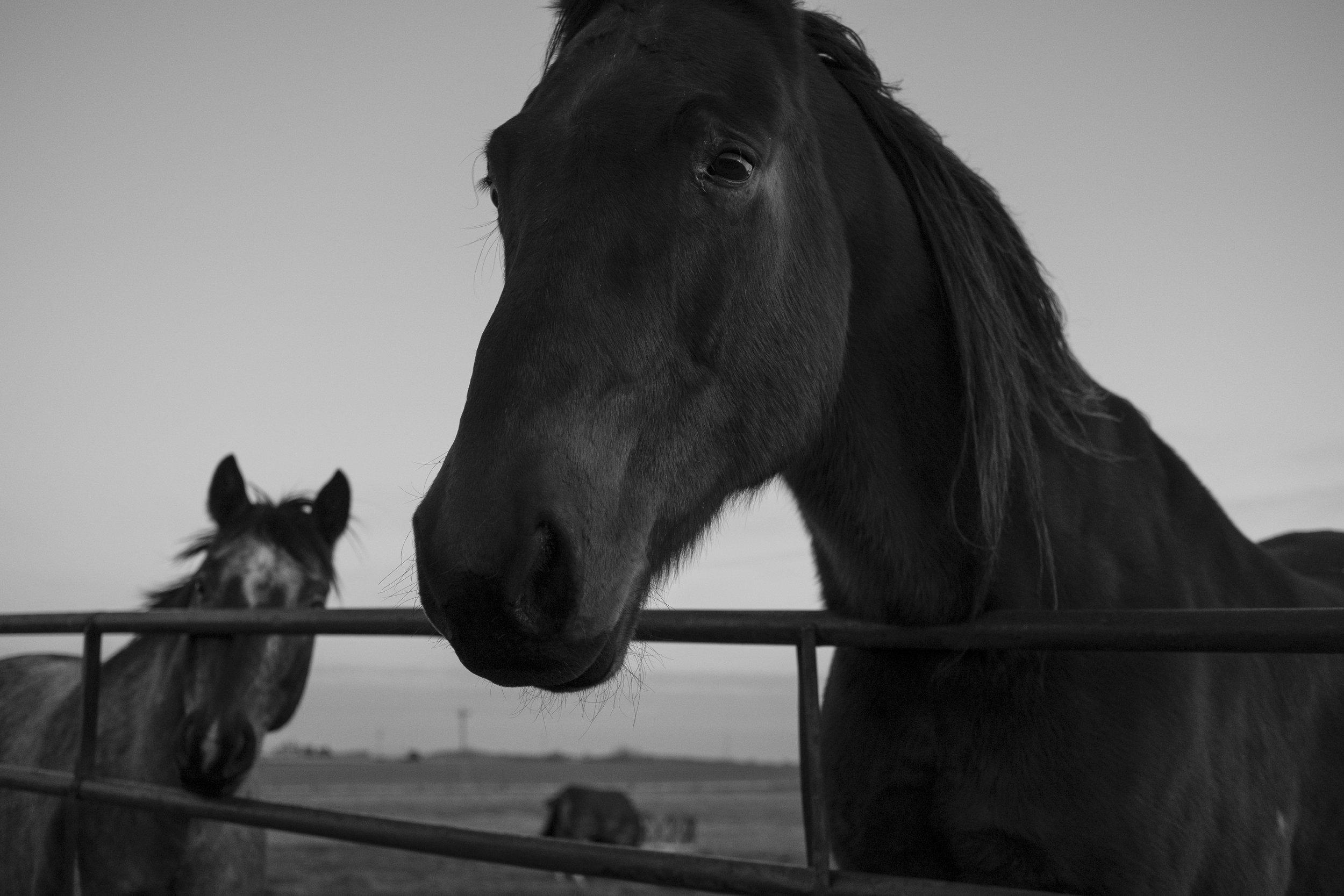 moms horses.jpg
