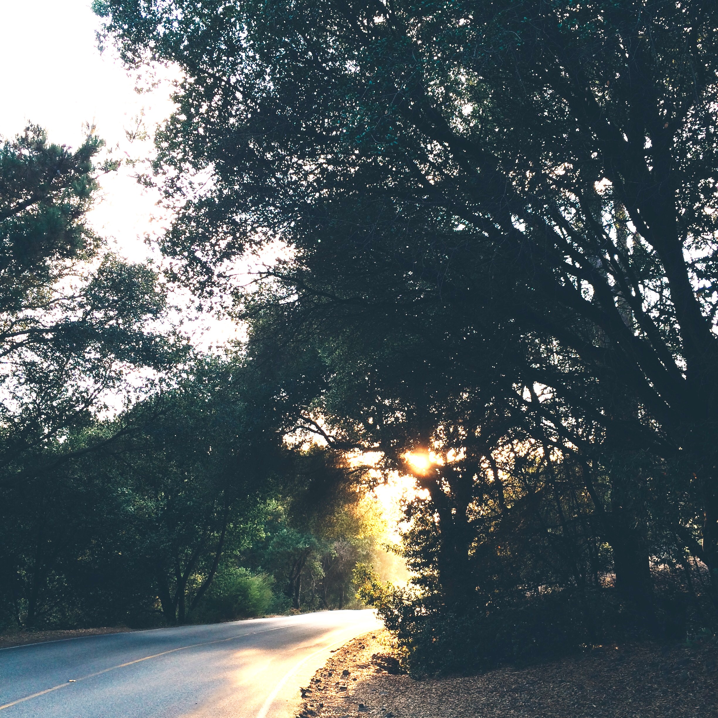 [Image of sunlight around a bend in the road in the woods. Photo by Mia Mingus]