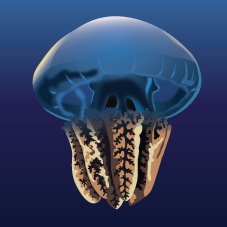 Blue Blubber Jellyfish